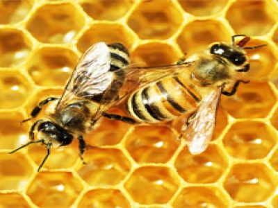 EXP3_Bees-Hive_220px